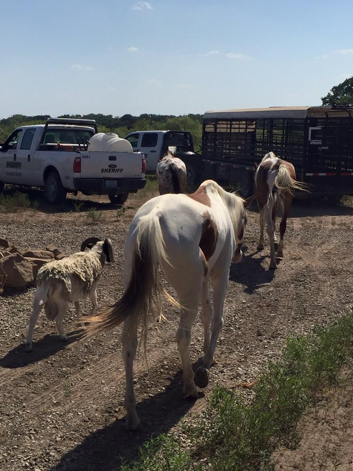 Animal Seizure Near Blooming Grove, TX